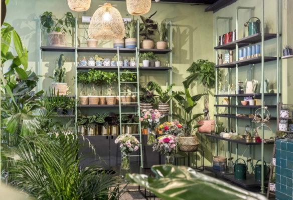 Label Experience: Exposition sur étagères de plantes vertes dans « Maison Bergamotte » à Paris.