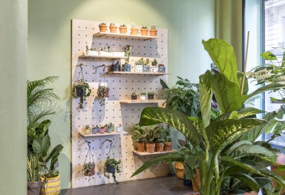 Label Experience: Plantes vertes dans des pots en terre sur étagère blanche dans « Maison Bergamotte » à Paris.