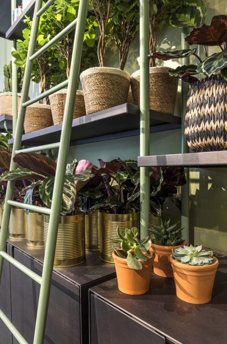Label Experience: Focus sur étagères et plantes dans la « Maison Bergamotte » à Paris.