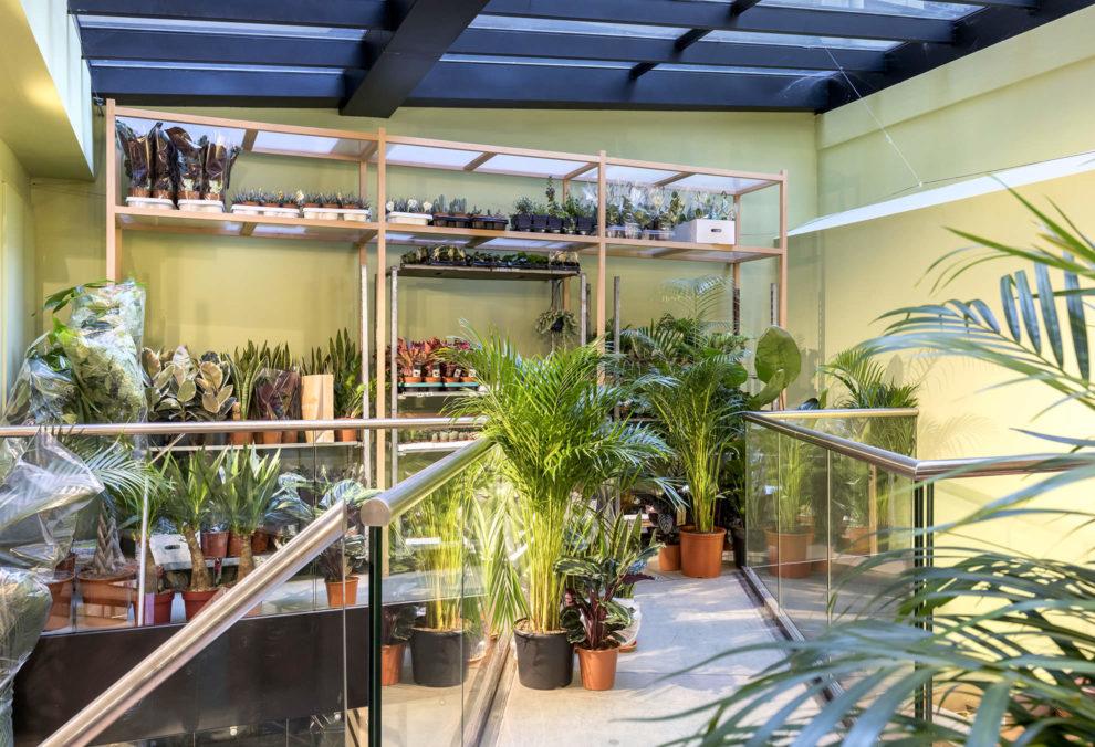 Label Experience: Deuxième étage végétale de la « Maison Bergamotte » à Paris.