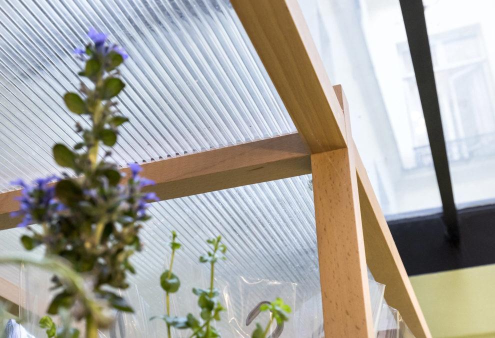 Label Experience: Focus de plantes sous serre à la « Maison Bergamotte » à Paris.