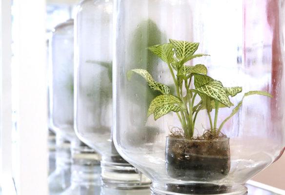 Label Experience : zoom sur les terrariums qui composent la bibliothèque botanique dans le pop-up Clarins Lab à Paris