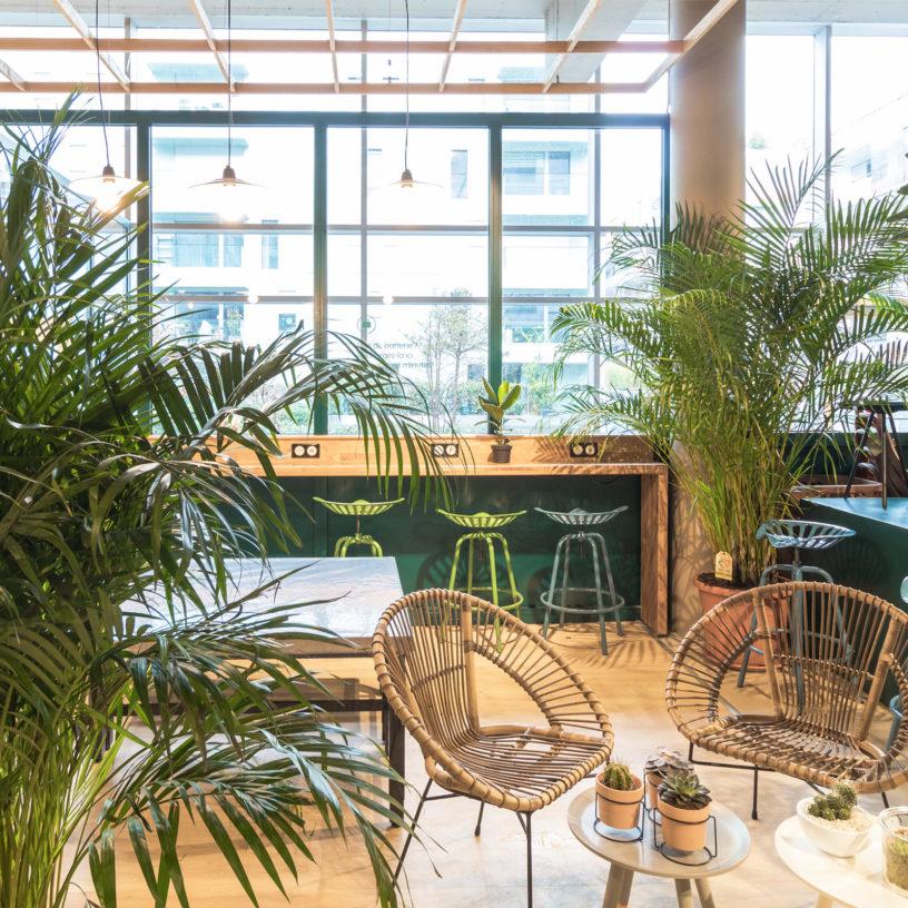 Label Experience: Espace derrière baie vitrée avec plantes vertes de la boutique « Truffaut » à Boulogne.