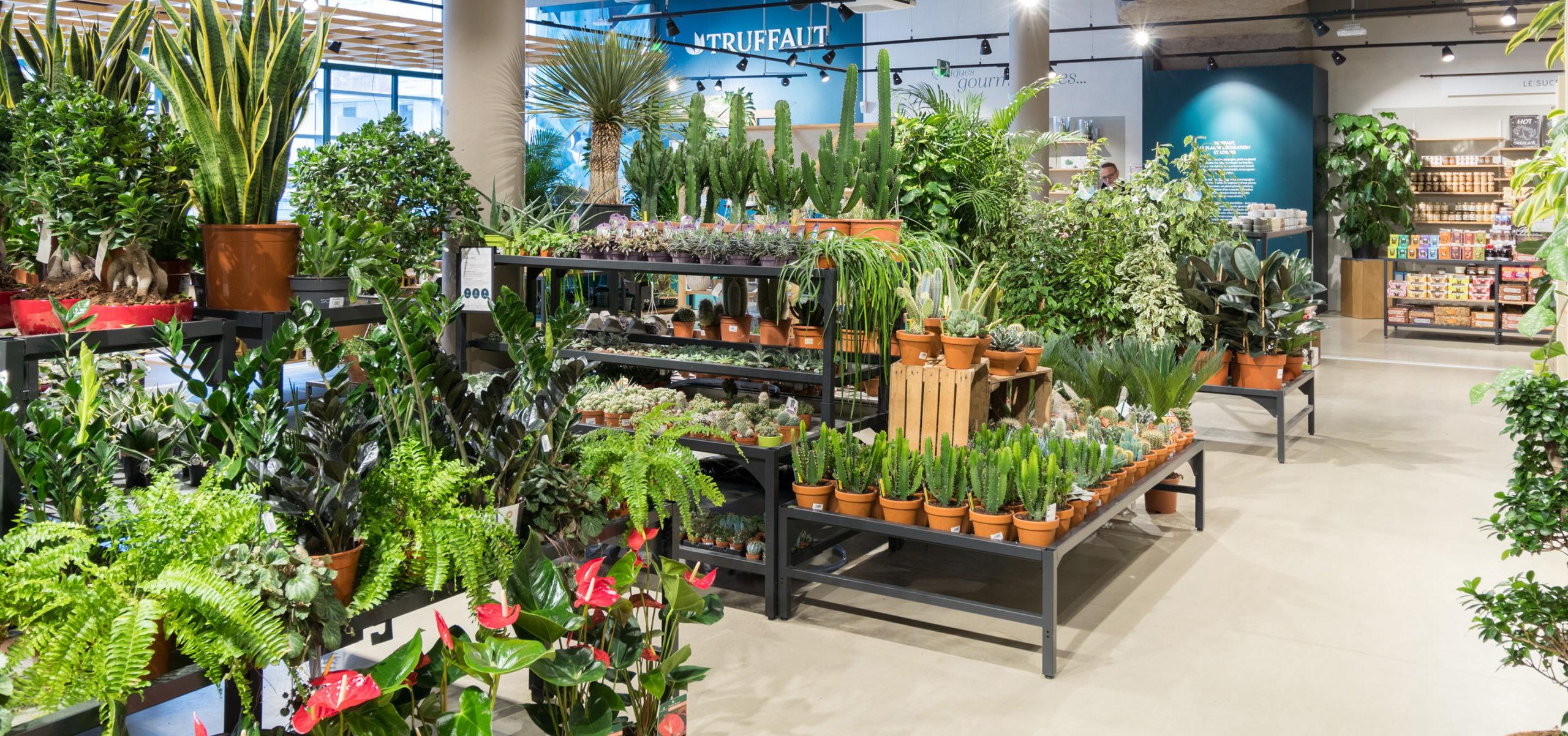 Label Experience: Nombreuses plantes vertes sur étagères de la boutique « Truffaut » à Boulogne.