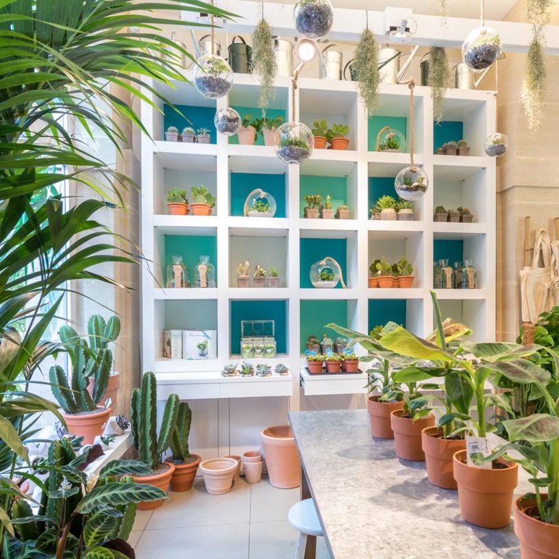 Label Experience: Corner végétal avec plantes, cactus et terrarium au pop-up store de « Truffaut » à Paris.