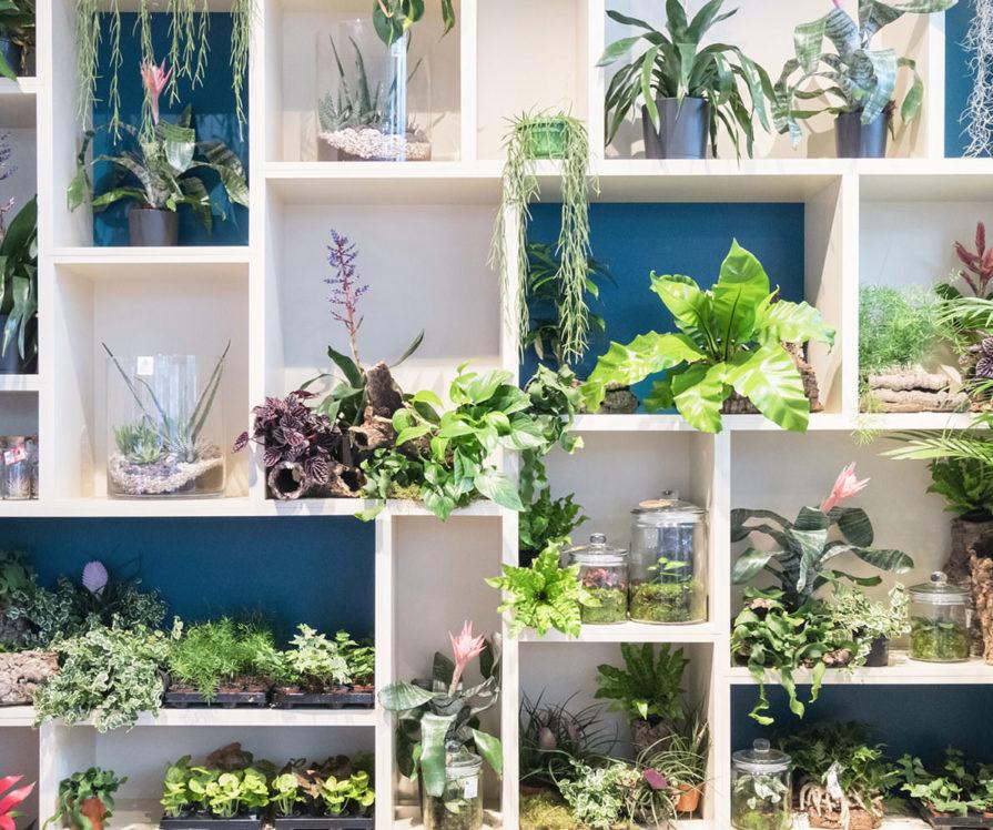 Label Experience: Plantes sur étagères de la boutique « Truffaut » à Toulouse.