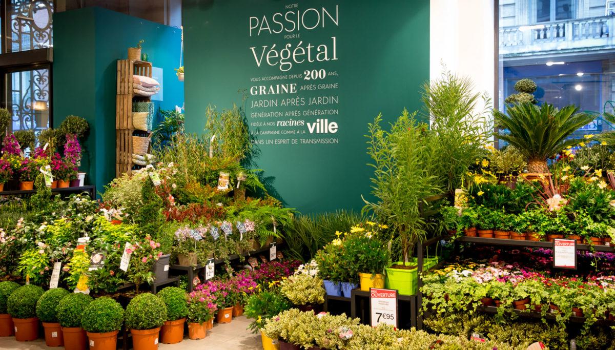Label Experience: Nombreuses plantes dans pièce verte de la boutique « Truffaut » à Toulouse.