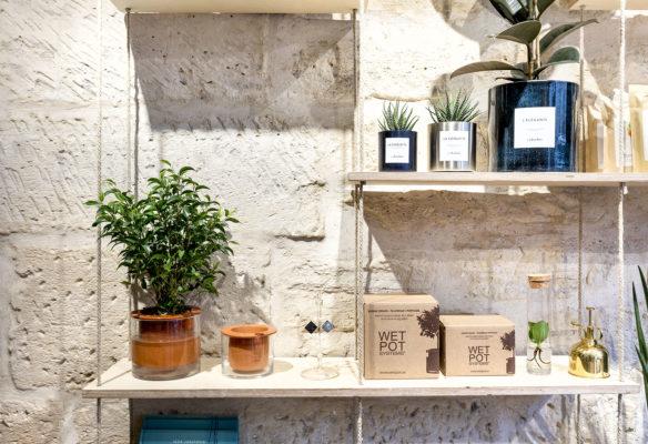 Label Experience : vente de plantes vertes d'intérieur dans la boutique Les Raffineurs à Bastille