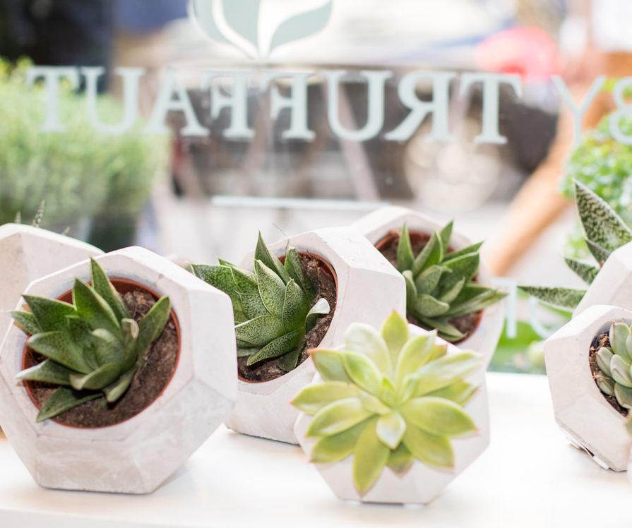Label Experience: Focus sur plantes grasses avec le logo en arrière plan au pop-up store de « Truffaut » à Paris.