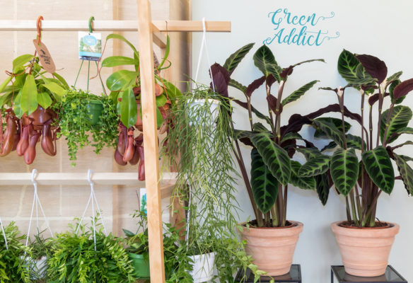 Label Experience: Focus sur exposition végétale avec le slogan « green addict » au pop-up store de « Truffaut » à Paris.