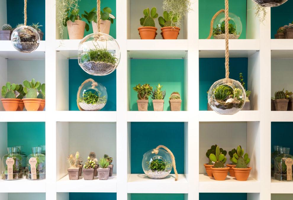 Label Experience: Etagères colorées avec plantes au pop-up store de « Truffaut » à Paris.