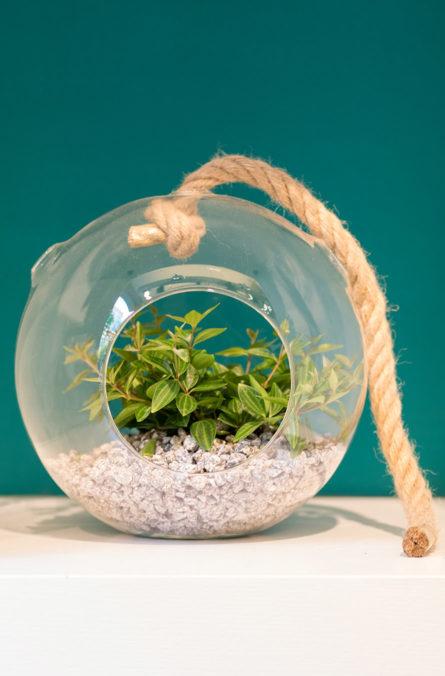 Label Experience: Zoom sur terrarium en bulle de verre et corde au pop-up store de « Truffaut » à Paris.